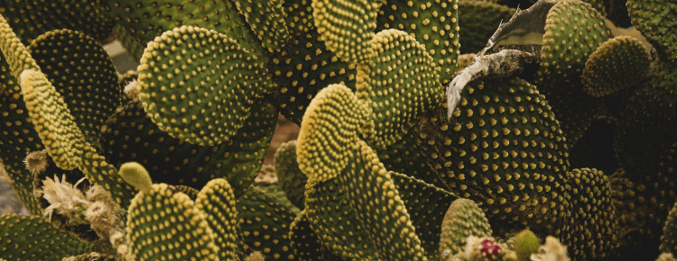 Why Cactus Water Is So Great For Your Skin